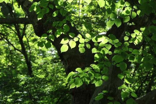 Closeup of deciduous trees